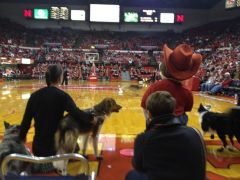 Halftime Dogs